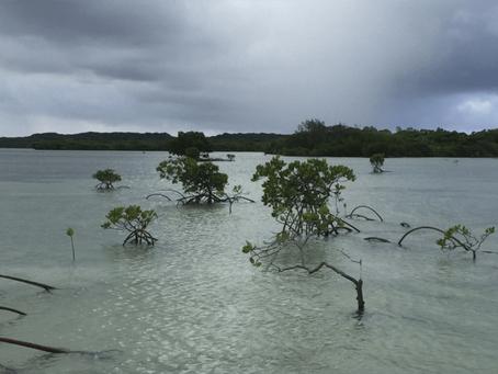 Preserving Coastal Wetlands Under Sea Level Rise