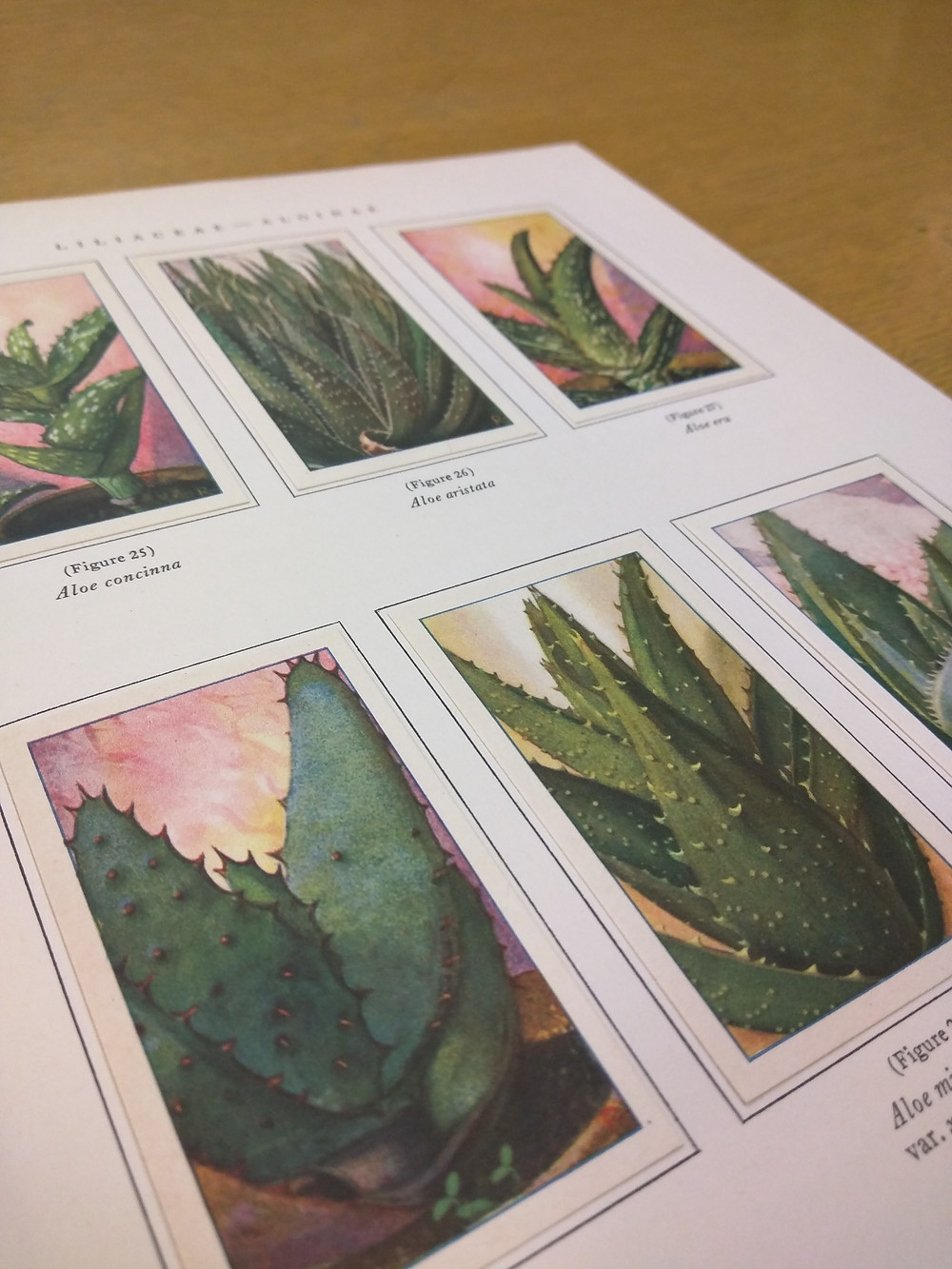 Succulent book on view at SJSU Library
