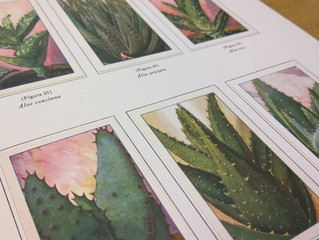 Botanica at SJSU Library, Casting Results, & A Great Website