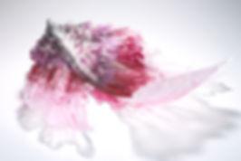kosogawa_RGB_8195.jpg