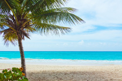 palm-and-beach