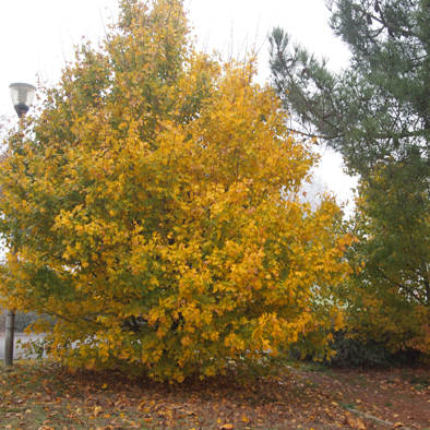 automne aux Vallées
