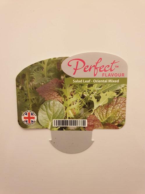 Veg Salad Leaf - Oriental Mixed