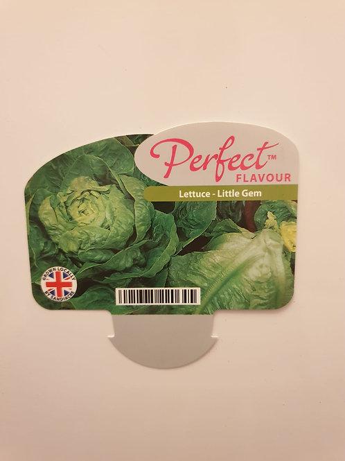 Veg Lettuce - Little Gem