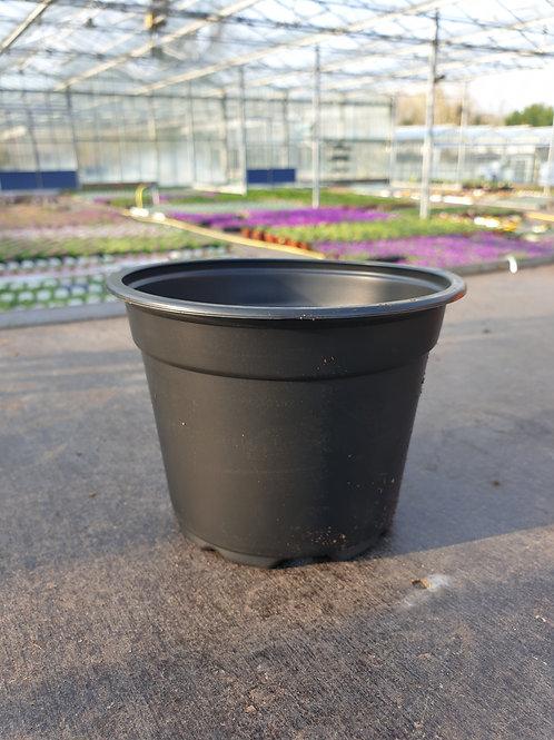 1L Plastic Pot