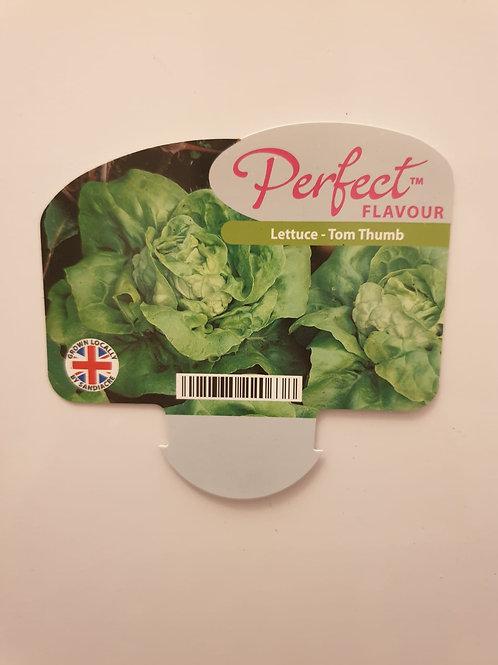 Veg Lettuce - Tom Thumb