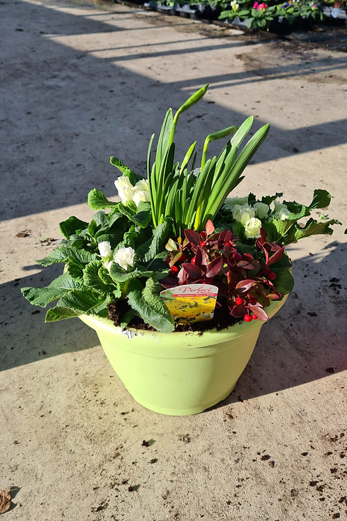 Bella - Planted Container - Celery
