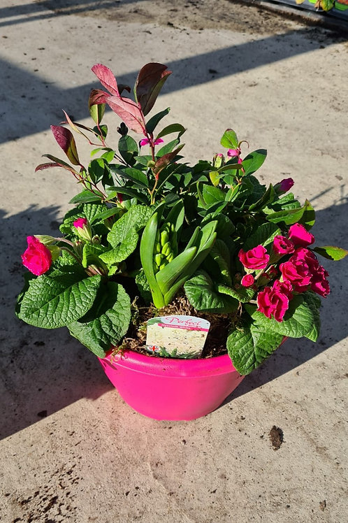 Bella - Planted Container - Pink