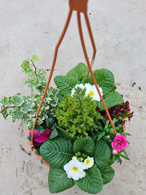 25 cm Terracotta Hanging Pot - Planted Container