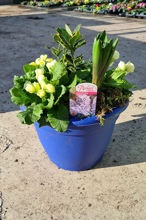 Bella - Planted Container - Ocean Blue