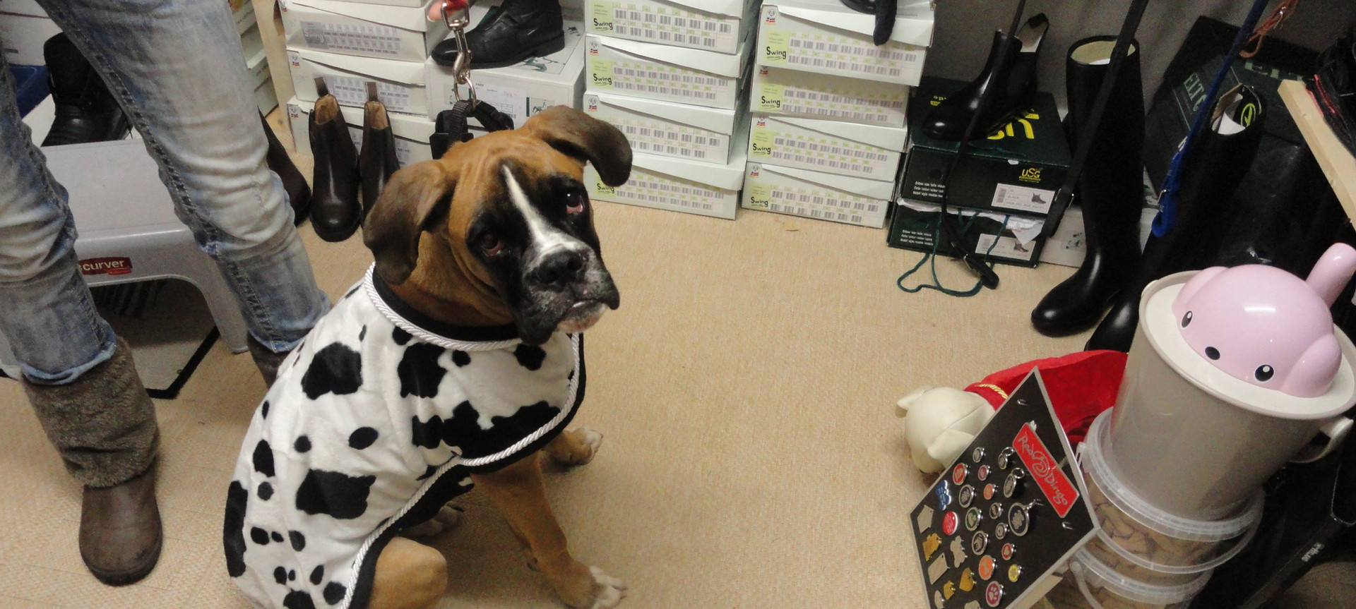 Hundemantel Dalmatiner.JPG