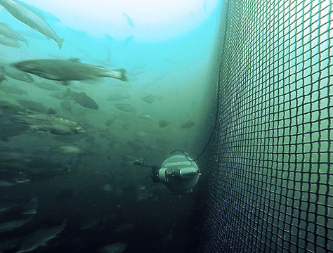 ROV-FishFarm-Net_crop.jpg