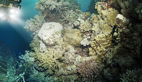 mini-rovs-are-making-underwater-inspecti