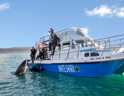 New boat with shark