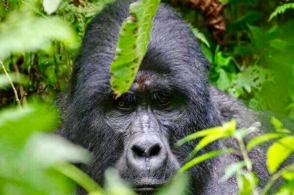 uganda 4