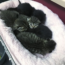 Photo of 6 newborn kittens, with one looking at the camera