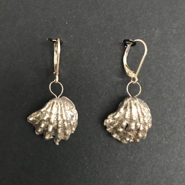 Silver Sea Shells 5.jpg