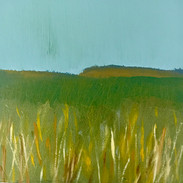 Tall Grass / Brown Hills