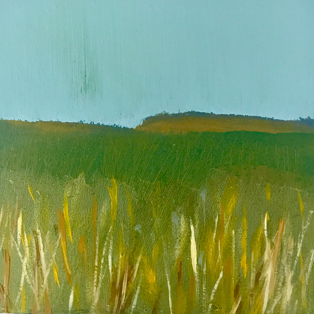 Tall Grass / Brown Hills