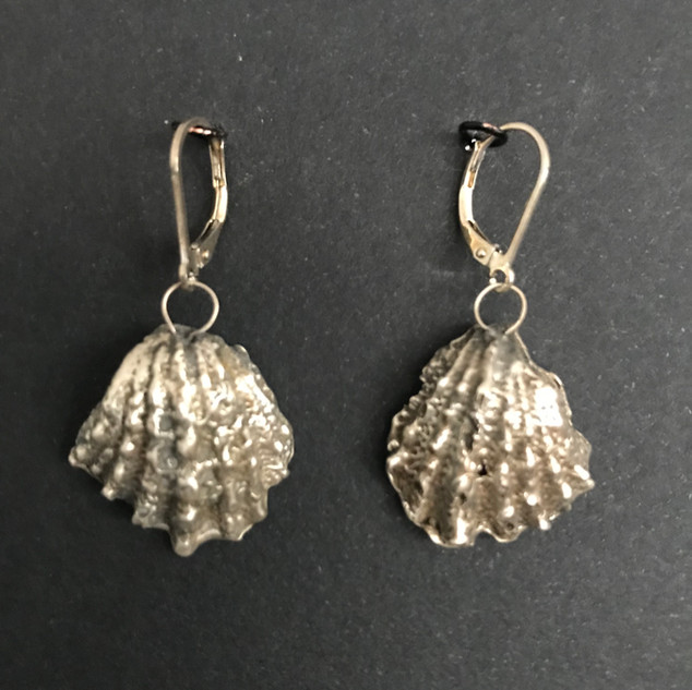 Silver Sea Shells 4.jpg