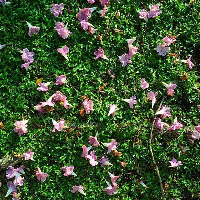 Beauty in fallen Flower Petals.