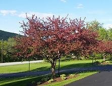 Woodstock Spring Braeside Property
