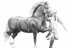 Welsh cob with trainer
