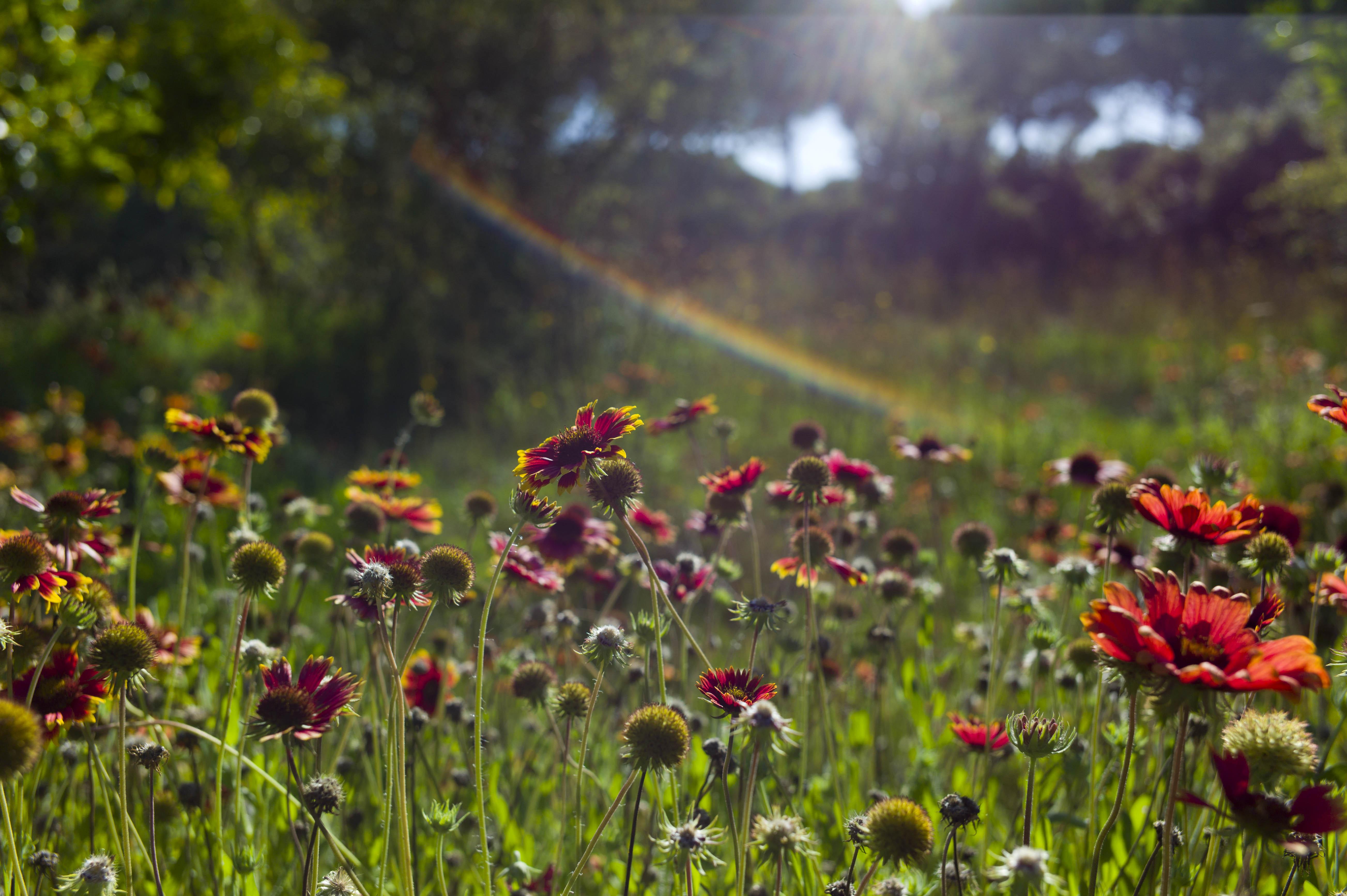 jardins+quinta+do+miguel