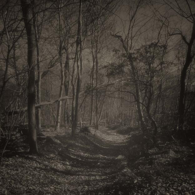 Alternative Forest