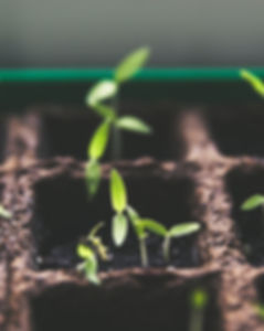 growing plants.jpg