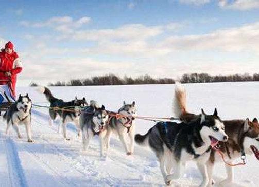 冬季狗拉雪橇极光4日