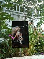Garden Art in the ground with horse photo