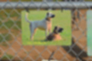 Garden Art hung on the fence with two dogs