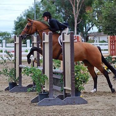 San Diego horse training, San Diego riding school, horseback riding lessons, learn how to ride, hunter/jumper training stable, hunter/jumper trainer, Bravado Farms, Tara Bemoll