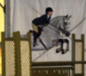 Kiwi - top medal horse for sale or lese