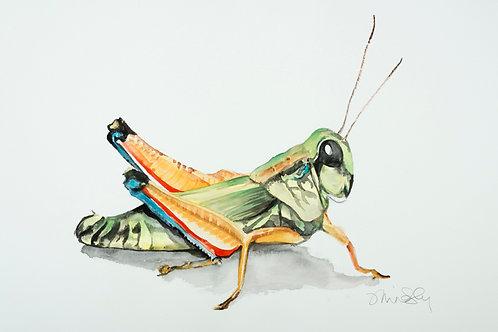 """19""""x 22"""" Grasshopper"""