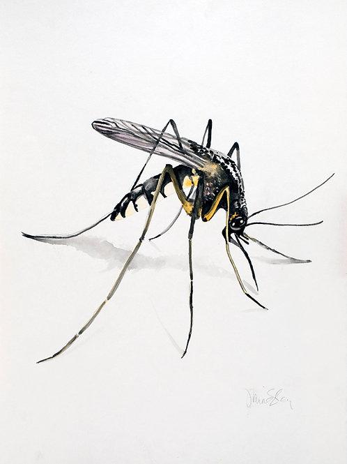 """19""""x22"""" Mosquito"""