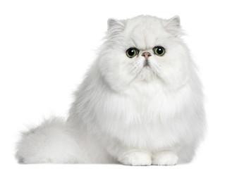 Os gatos e a Doença Renal Crônica