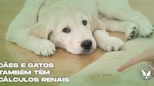 Cálculos renais em cães e gatos