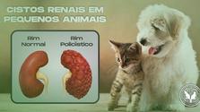 Cistos renais em pequenos animais, o que fazer?