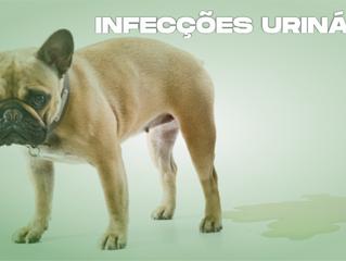 Infecções urinárias, um inimigo subestimado (Parte II)