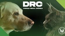 Estadiamento para doença renal crônica (DRC)