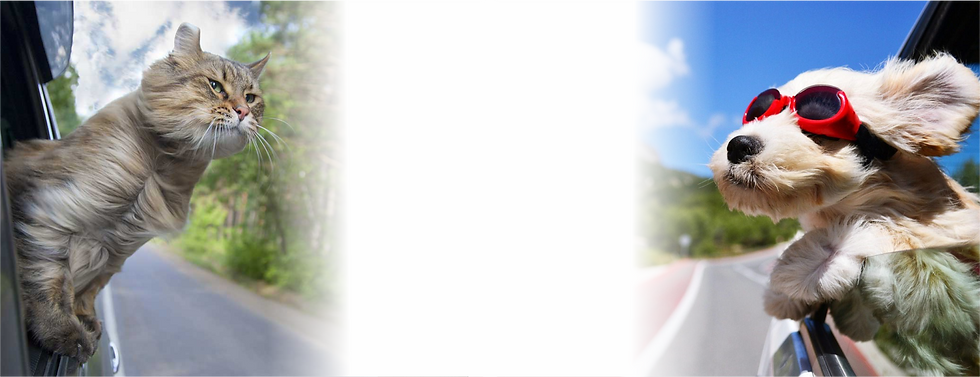 Banner site01.png