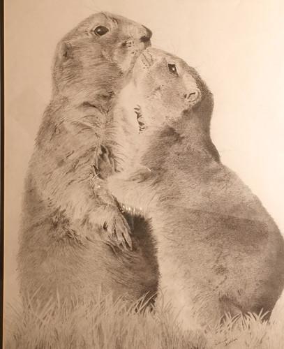 Kissing Prairie Dogs
