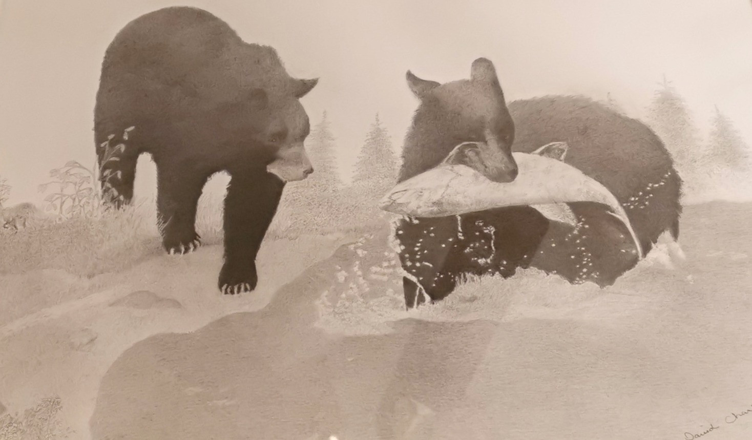 Black Bears Fishing.