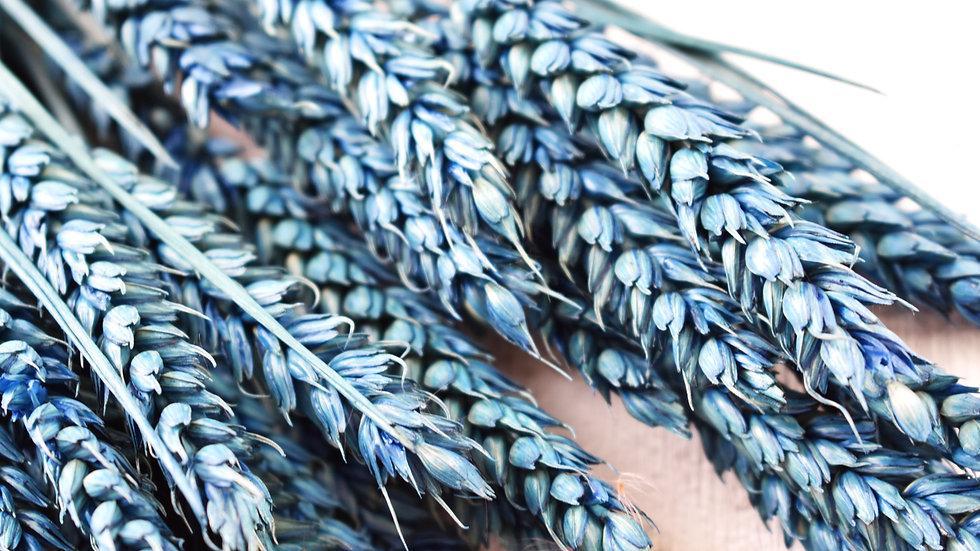 Blue Dried Wheat | Dried Flowers | Dried Flower Bar UK