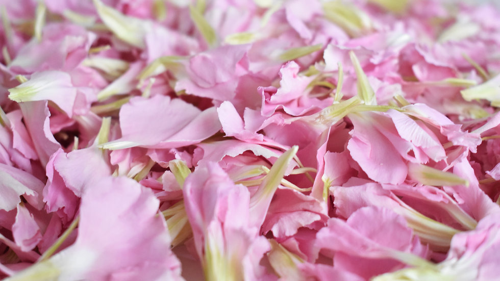 Pink Carnation Confetti | Biodegradable Confetti | Air Dried Pink Carnations