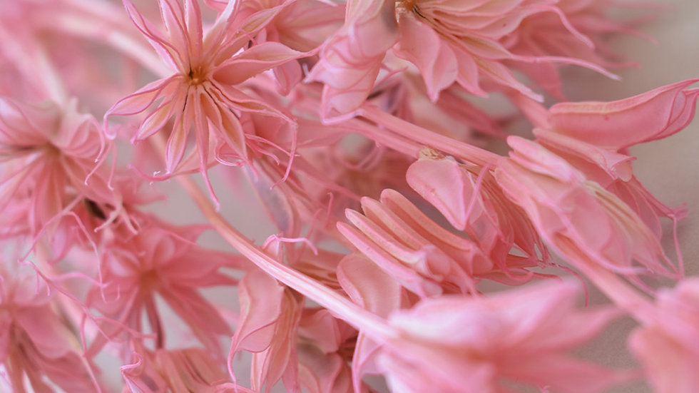 Pastel Pink Nigella Bunch