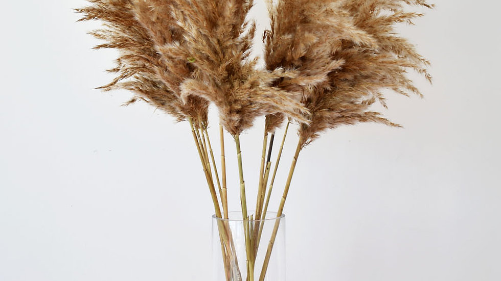 Reed Plume Pampas Grass