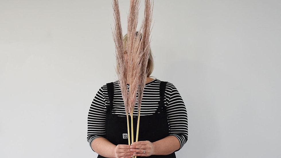 Pink Pampas Grass | Dried Flowers | Pampas Grass